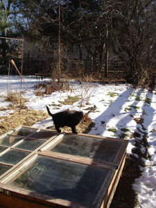 carmen cold frame watcher