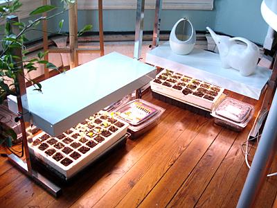 seedstartingsetup