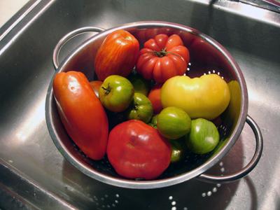tomatoesincolander