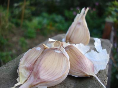 garlic_upclose