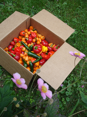 pepperbox